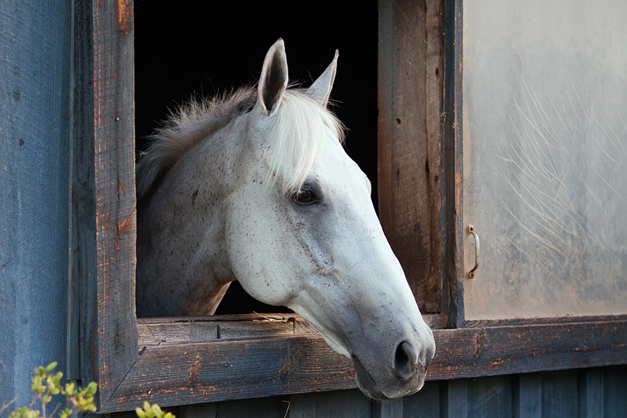 Grey horse stall
